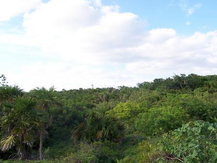 Végétation tropicale dans la région de Tulum