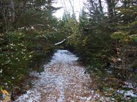 Tapis de feuilles mortes dans les sentiers de neige de l'automne