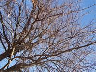 Labyrinthe de branches d'arbres