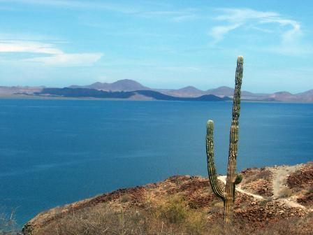 Le cactus solitaire
